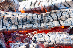 Hot burning firewood in campfire Stock Image
