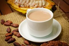 Hot cacao drink, raw cocoa fruit, cacao beans, powder. On table Royalty Free Stock Photos