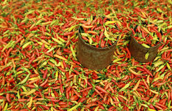 Hot chili Royalty Free Stock Photography