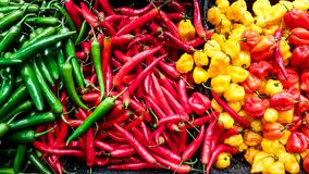 Hot chili colorful mix of peppers Royalty Free Stock Photography