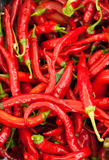 Hot chili pepper Royalty Free Stock Photo