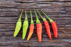 Hot chili pepper Stock Photos