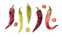 Hot chili pepper set royalty free illustration