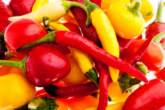Hot chili peppers Stock Images