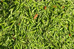 Hot chili peppers background. Green hot chili peppers background Royalty Free Stock Photos