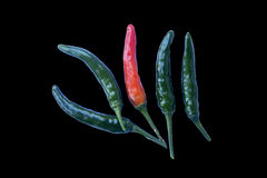 Hot chili peppers isolated on black  background Royalty Free Stock Image