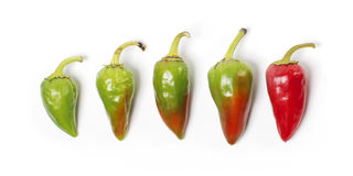 Hot Chili peppers Stock Photo
