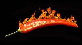 Hot chili Stock Image