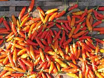 Hot Chilli! Royalty Free Stock Photo