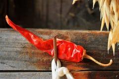 Hot chilli Stock Photos