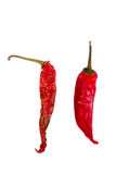 Hot chilli dry. Concept about  dry and wet hot chilli Royalty Free Stock Image