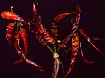 Hot chilli peppers Stock Images