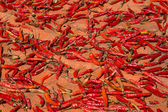 Hot chilli peppers Royalty Free Stock Image