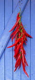 Hot chilli peppers hanging on blue door Stock Image