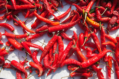 Hot chilli in sun light  Royalty Free Stock Images