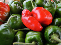 Hot chilly. Red and green hot chilly peepers stock photography