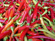 Hot chilly peppers Stock Photography