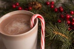 Hot chocolate, candy cane and evergreen boughs. With holly berry close up Royalty Free Stock Photo