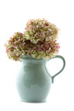 Hot chocolate jug with dried hydrangea flowers Royalty Free Stock Photography