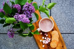 Hot chocolate with marshmallows and homemade stamped butter cookies next to the lilac focused on the lilac Royalty Free Stock Photography