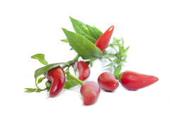 Hot cili peppers Royalty Free Stock Photo