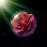 Hot Cocoa Rose In Glass Globe Royalty Free Stock Photo