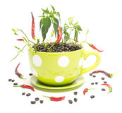 Hot Coffee. Yellow polka dot coffee mug filled with coffee beans and hot chili peppers Stock Photos