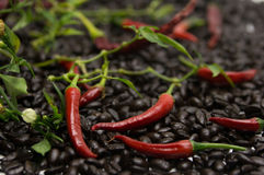 Hot Coffee. Bed of coffee beans with red hot chili peppers Stock Photo