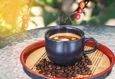 Hot coffee cup on table with coffee tree background Royalty Free Stock Photography