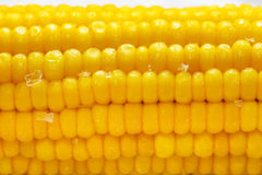 Hot Corn Royalty Free Stock Images