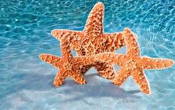 Hot crustacean band Stock Photos
