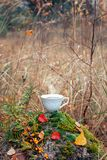 Hot cup of coffee on a rock in autumn stock photos