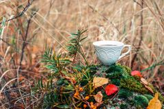 Hot cup of coffee on a rock in autumn royalty free stock photos