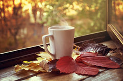 Hot cup of tea. White hot cup of tea on autumn leaves Royalty Free Stock Image