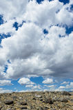Hot day in Altai steppe Royalty Free Stock Photography