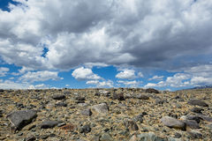 Hot day in Altai steppe Stock Photography