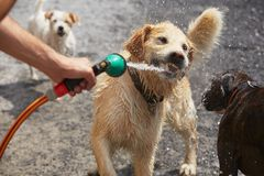 Hot day with dogs Royalty Free Stock Photos
