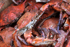 Hot and Dirty Crabs. A pile of hot and dirty crabs, covered in seasoning Stock Photos