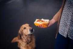 Hot dog avec le ketchup avec le chien sur le fond noir image stock