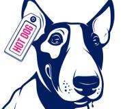 Hot dog di bull terrier Fotografia Stock Libera da Diritti