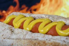Hot dog with red sausage meat and mustard Royalty Free Stock Photo