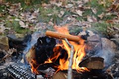 Hot dog on a stick over bonfire in the forest royalty free stock photos