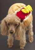 Hot Doggie Dog Royalty Free Stock Photo