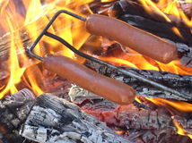 Hot dogs being roasted. Two hot dogs being roasted over a fire Royalty Free Stock Photo