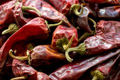 Hot dried red mexican chillies peppers, close up image stock photography