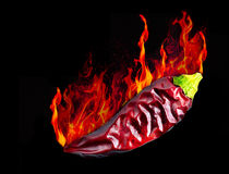 Hot dryed chili peppers on a black background on flames Royalty Free Stock Image