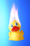Hot Duck Royalty Free Stock Image