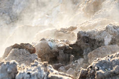 A hot earth. Background of a hot earth ground with steam in winter outdoors Stock Images