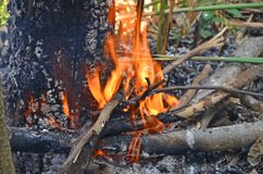 Hot fire destroy dead tree in the forest. Hot fire burns and destroies dead tree and plants in the forest stock images