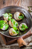 Hot and fresh snails with garlic butter and parsley Stock Photography